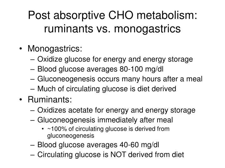 Post absorptive CHO metabolism: