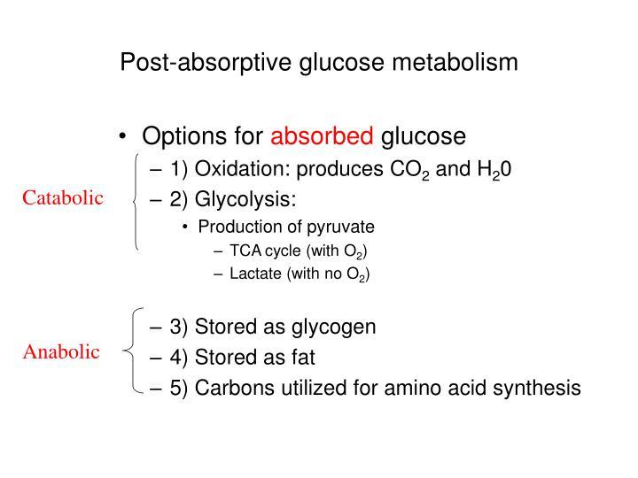 Post-absorptive glucose metabolism