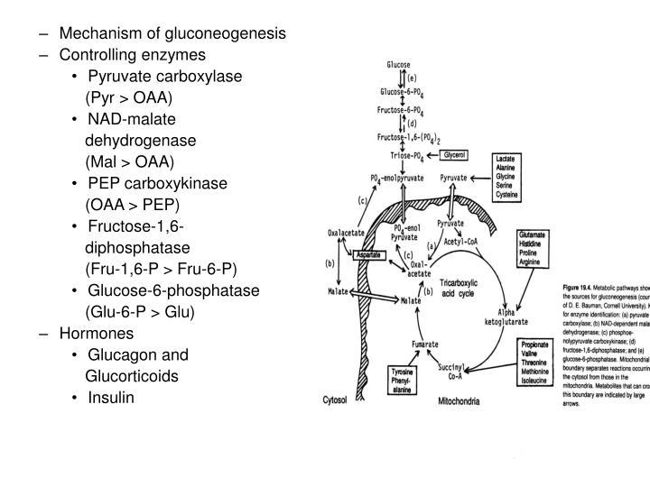 Mechanism of gluconeogenesis