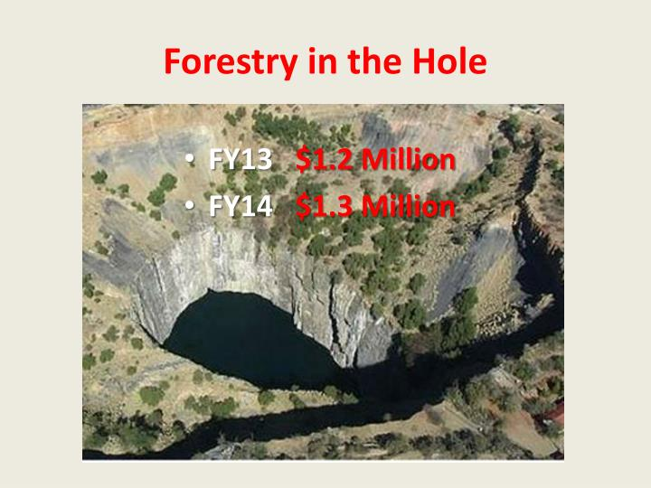 Forestry in the Hole