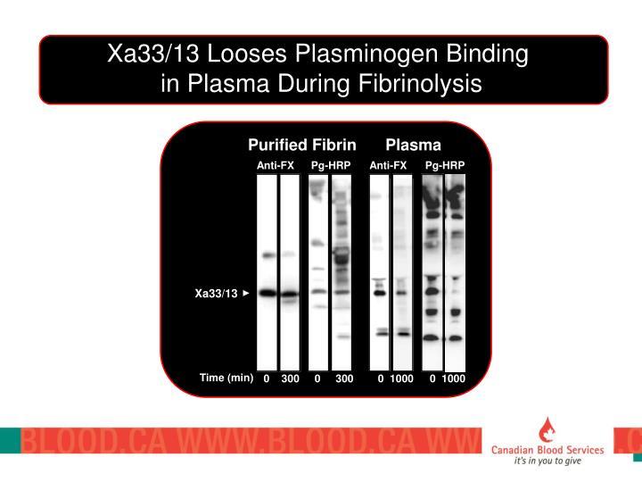 Xa33/13 Looses Plasminogen Binding