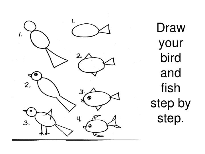 Draw your bird and fish step by step.