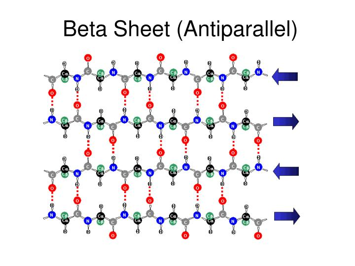 Beta Sheet (Antiparallel)