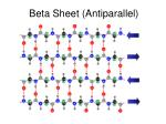 beta sheet antiparallel