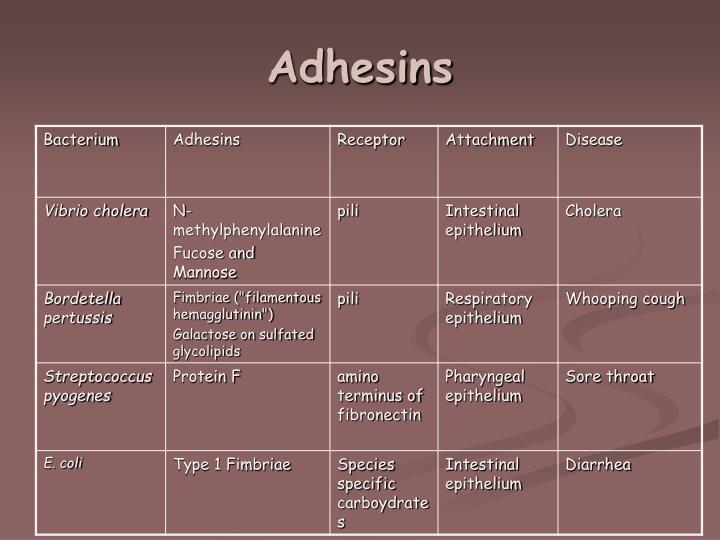 Adhesins