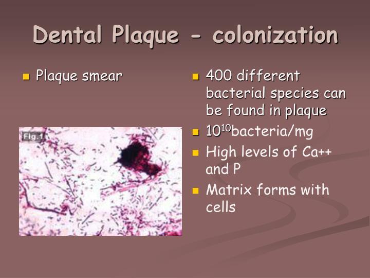 Plaque smear