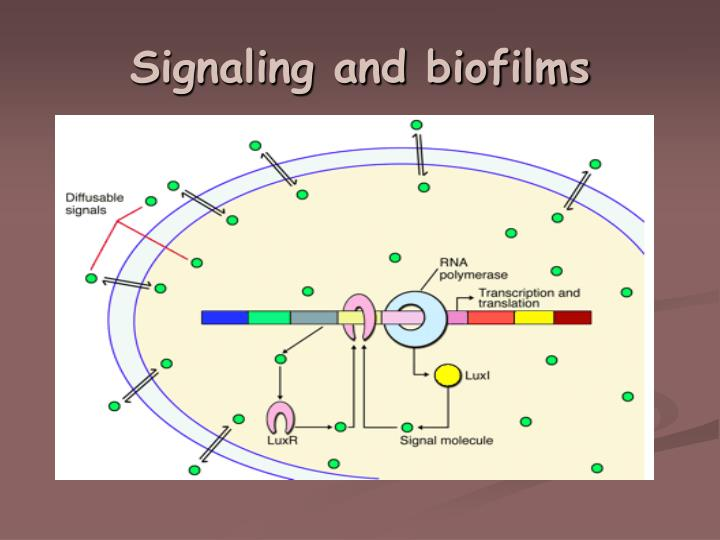 Signaling and biofilms