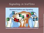 signaling in biofilms