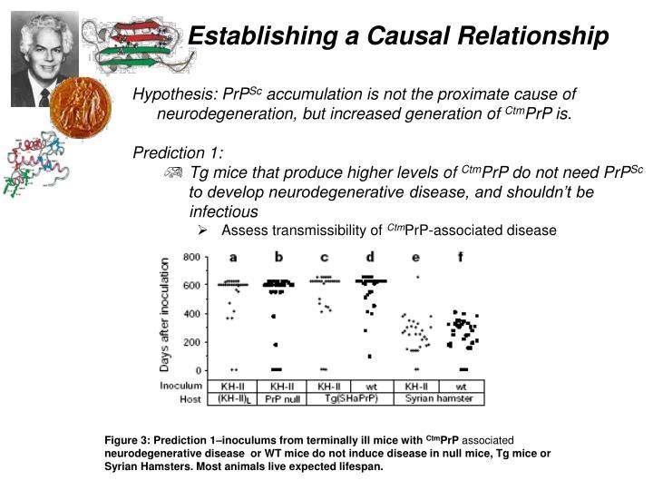 Hypothesis: PrP