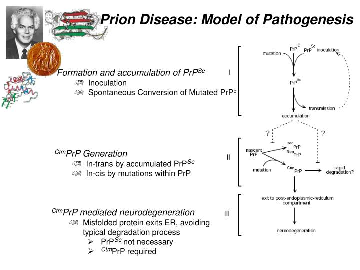 Formation and accumulation of PrP