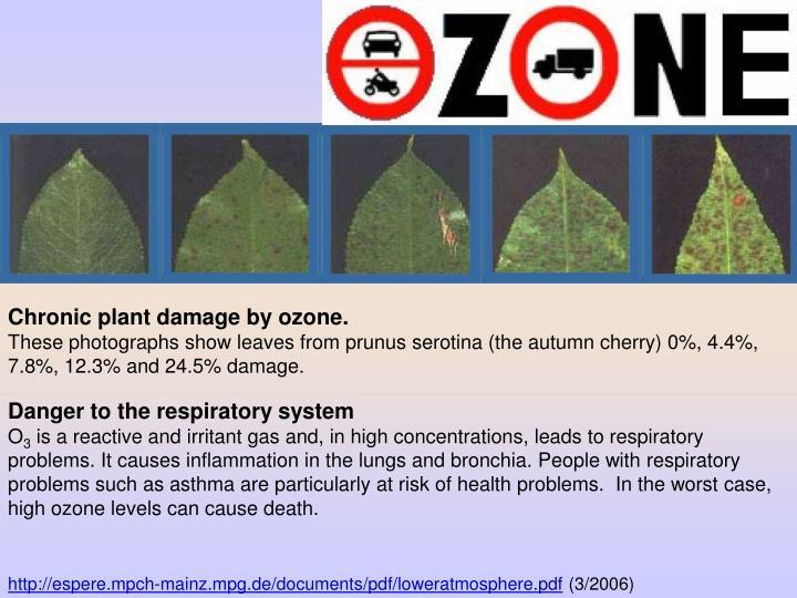 Chronic plant damage by ozone.