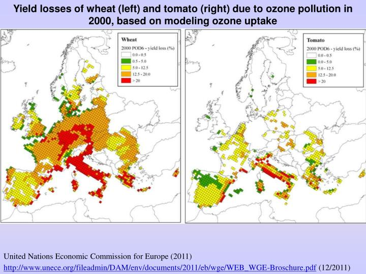 Yield losses of wheat (left) and tomato (right) due to ozone pollution in 2000, based on modeling ozone uptake