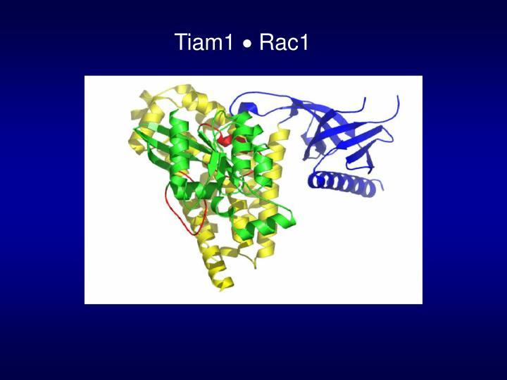 Tiam1