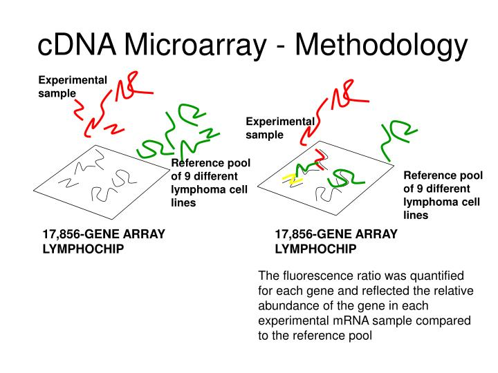 cDNA Microarray - Methodology