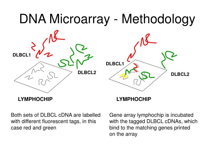 DNA Microarray - Methodology