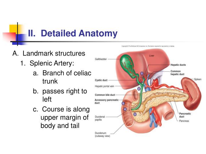 II.  Detailed Anatomy