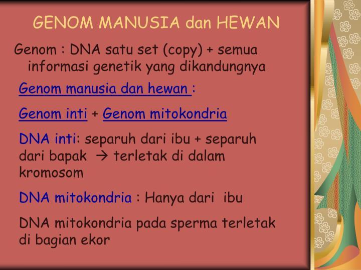 GENOM MANUSIA dan HEWAN