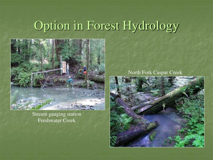 Option in Forest Hydrology