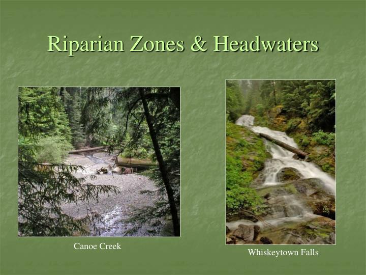 Riparian Zones & Headwaters