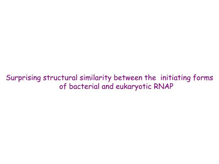 Surprising structural similarity between the  initiating forms of bacterial and eukaryotic RNAP