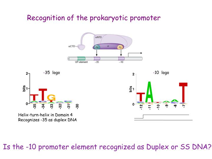 Recognition of the prokaryotic promoter