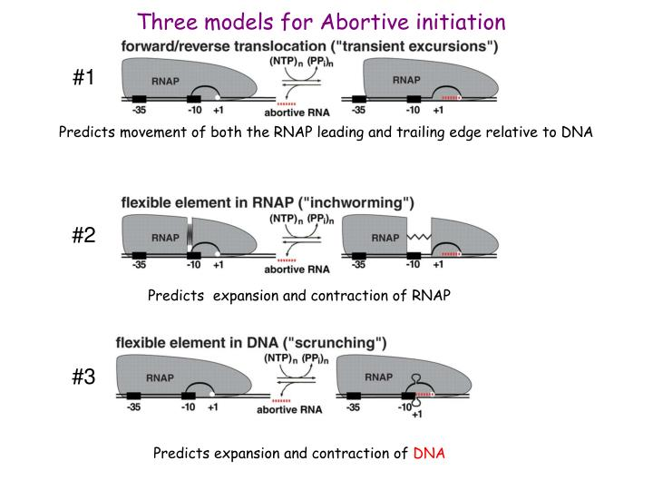 Three models for Abortive initiation