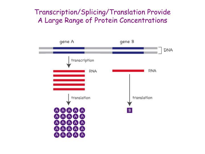 Transcription/Splicing/Translation Provide