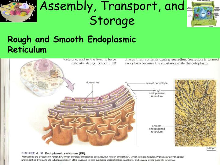 Assembly, Transport, and Storage