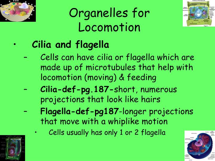 Organelles for Locomotion