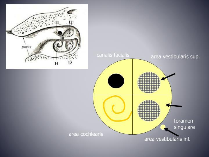 canalis facialis