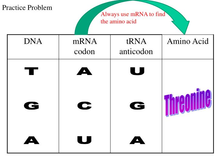 Always use mRNA to find the amino acid