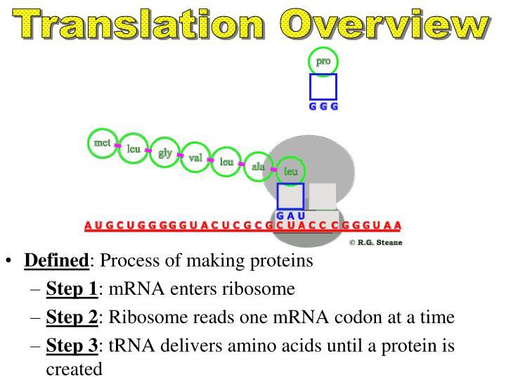 Translation Overview