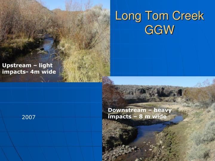 Long Tom Creek