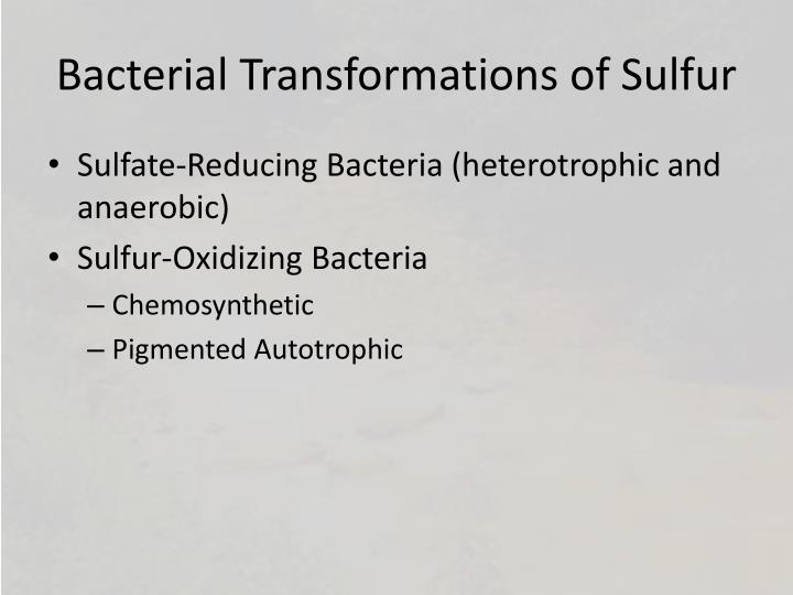 Bacterial Transformations of Sulfur
