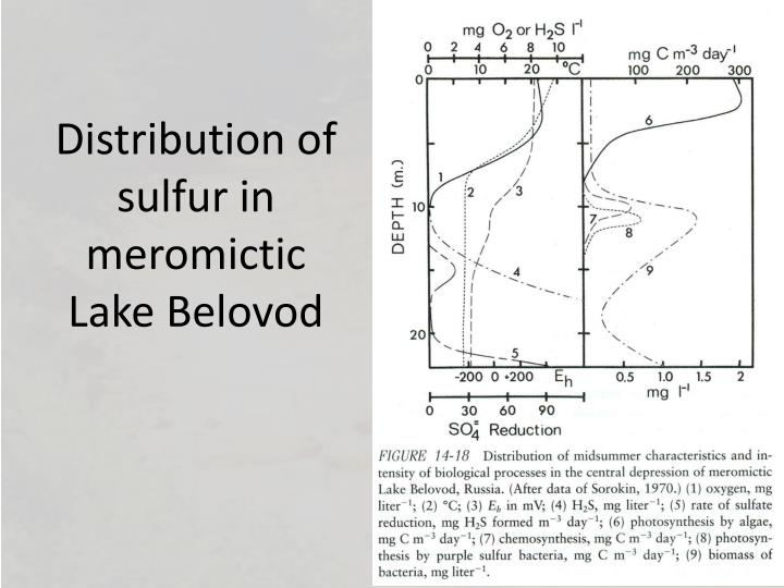 Distribution of sulfur in