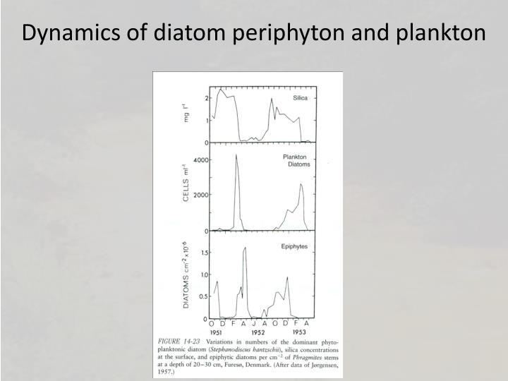Dynamics of diatom