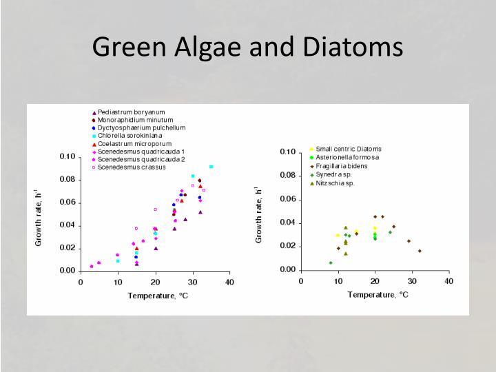 Green Algae and Diatoms