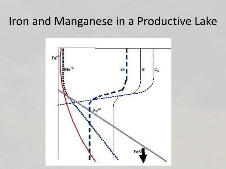 Iron and Manganese in a Productive Lake