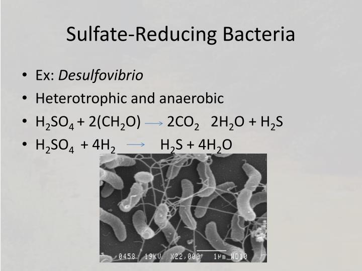 Sulfate-Reducing Bacteria