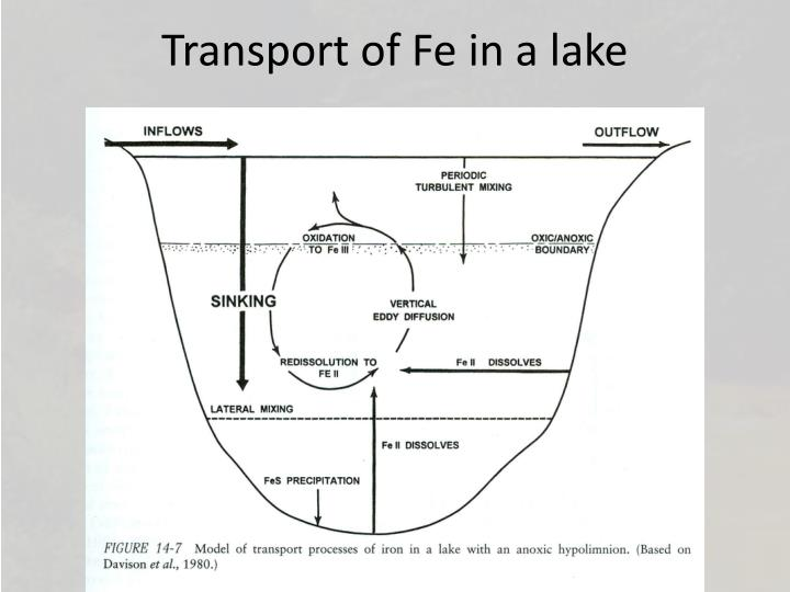 Transport of Fe in a lake