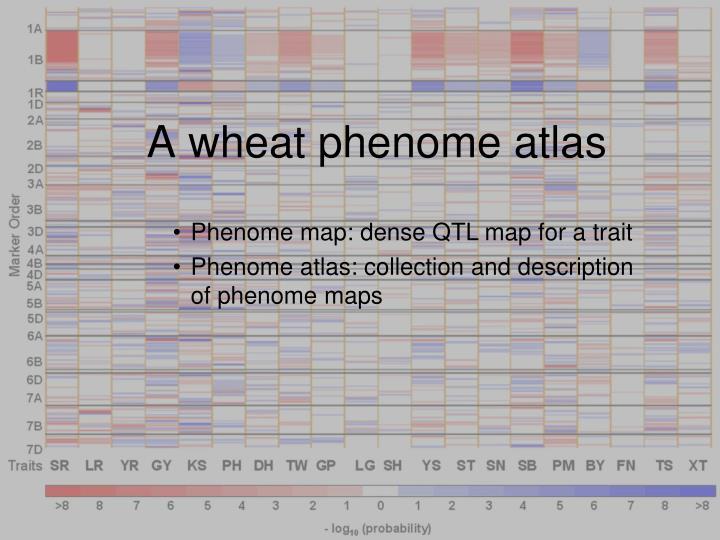 A wheat phenome atlas