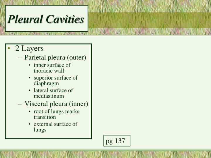 Pleural Cavities