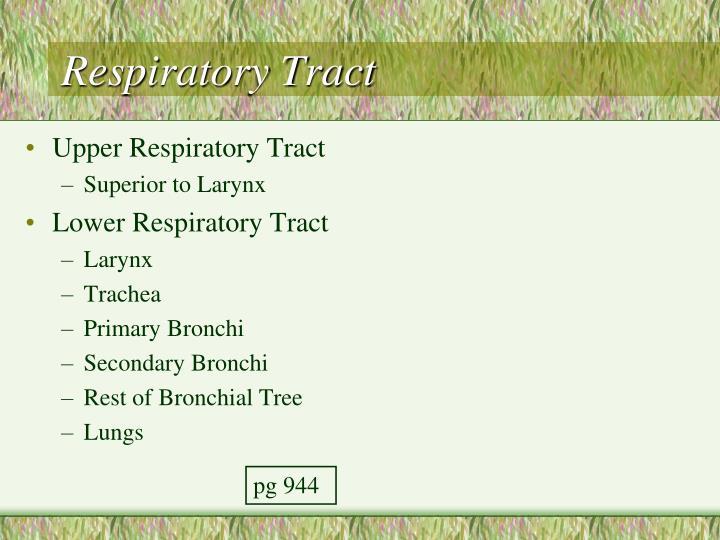 Respiratory Tract