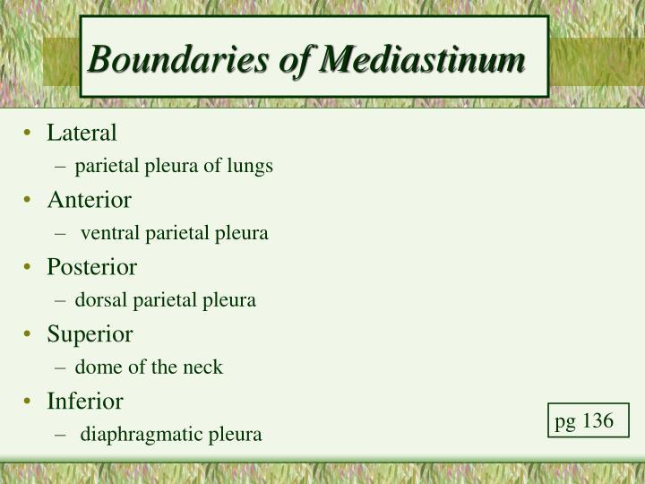 Boundaries of Mediastinum