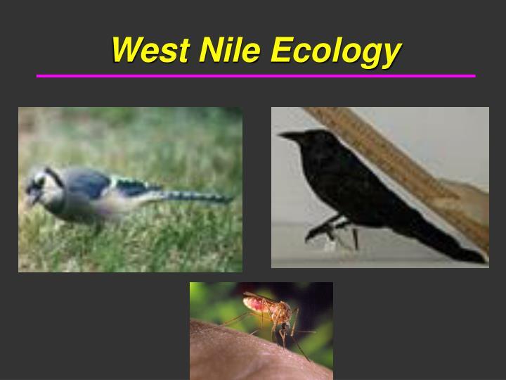West Nile Ecology