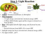 step 1 light reaction