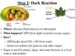 step 2 dark reaction