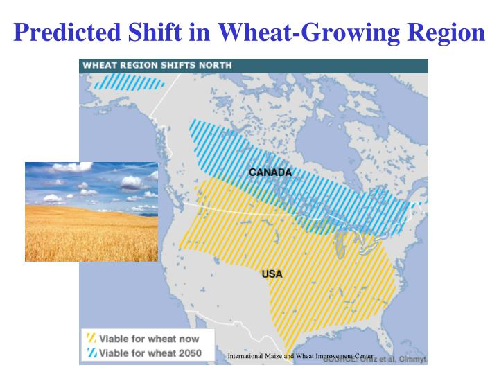 Predicted Shift in Wheat-Growing Region