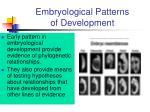 embryological patterns of development