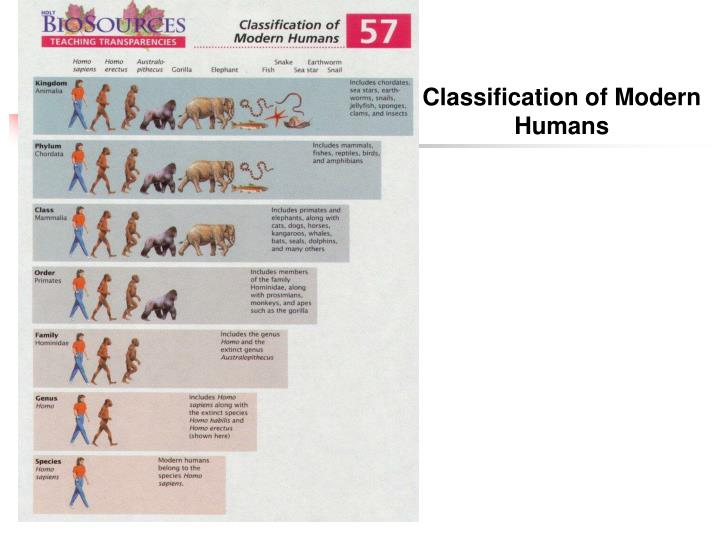 Classification of Modern